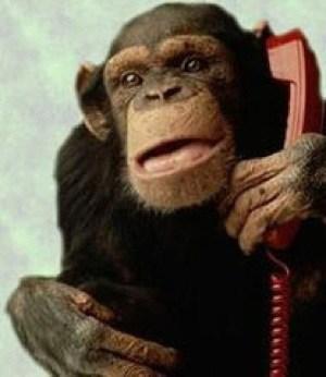 idiot-phone